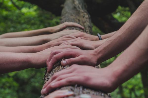 Row of hands on a fallen tree trunk.