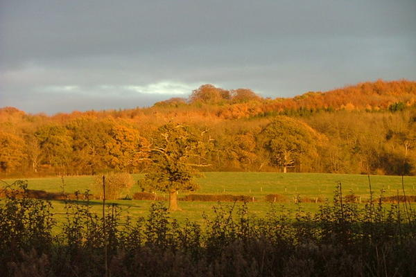 Wytham Woods at sunset