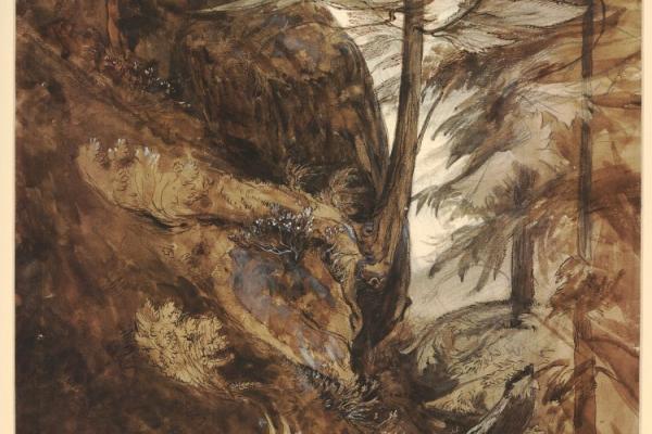 bm ruskin trees