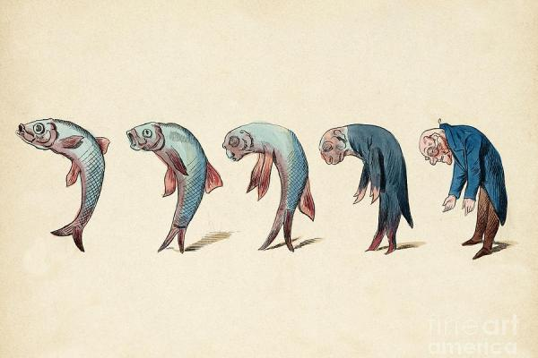evolution of fish into old man c 1870 wellcome images