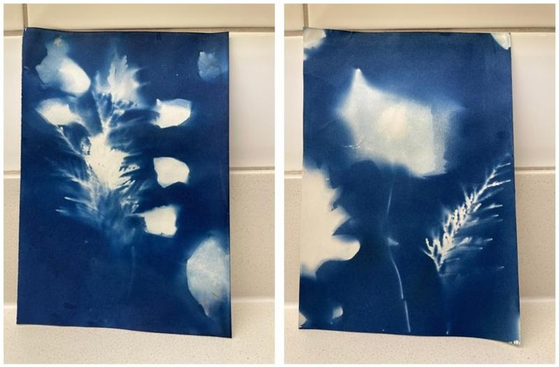 Artwork - white leaf shapes on blue background