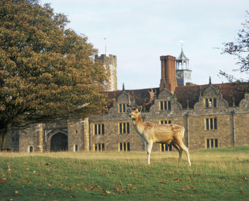 A deer at Knole
