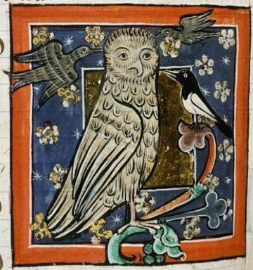 Medieval owl illimination