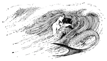 queer studies mermaid