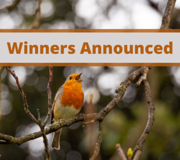 A red-breasted robin singing in a leafless tree branch, above a grey square says winners announced in brown