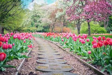 beautiful bloom blooming 414160