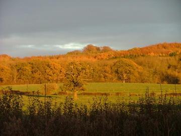 Wytham Woods at sunset