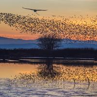 moving together flock of birds bronwyn tarr