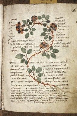 botanical ontologies